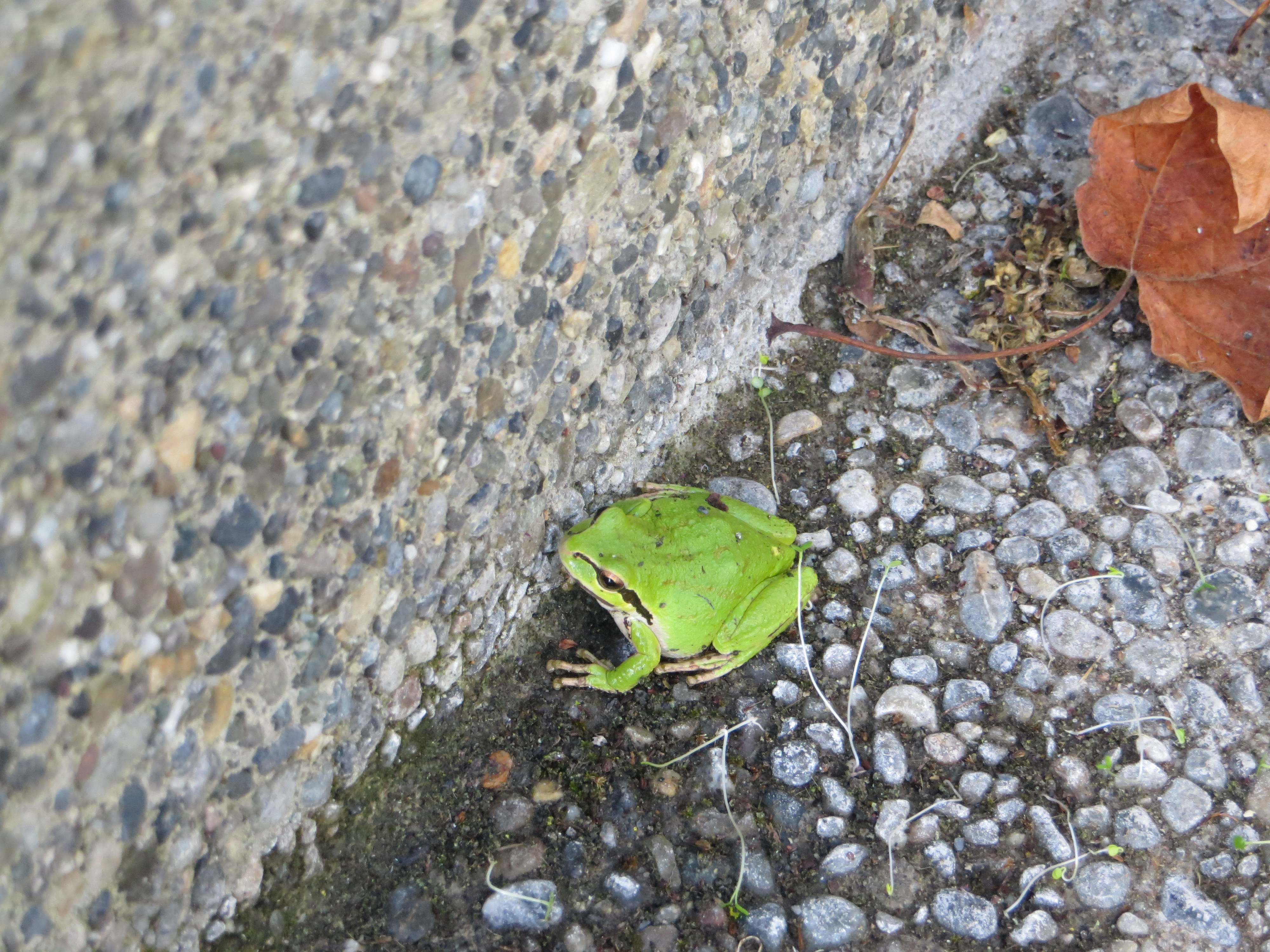 frog friend in the backyard inspiration in a photo