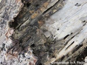 Weathered drift wood_close up