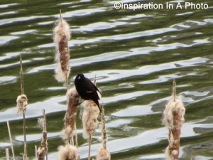 Bird on reed