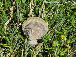 Shell on the grass