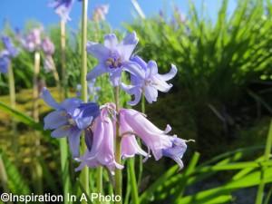 Purple flowers_parking lot
