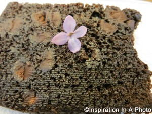Chocolate pound cake with lilac