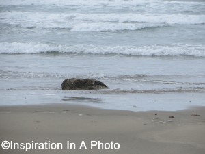 Whale rock at beach_ocean