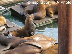 Sea lions in the bay