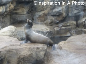 Sea lion at the aquarium