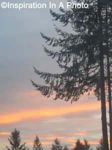 Setting sun beyond trees