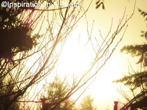Sun rising_behind trees
